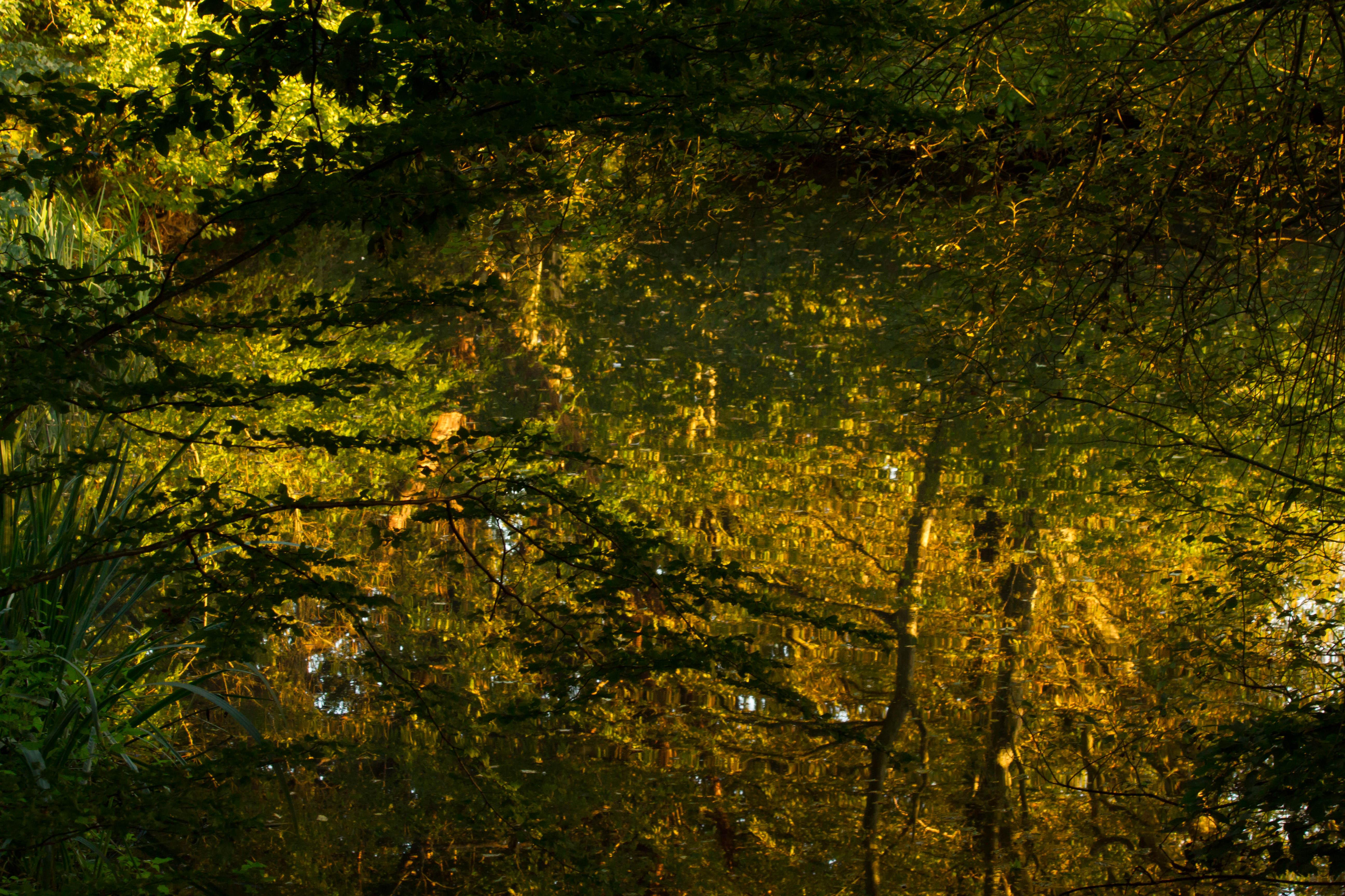 Dappled Autumn Pond