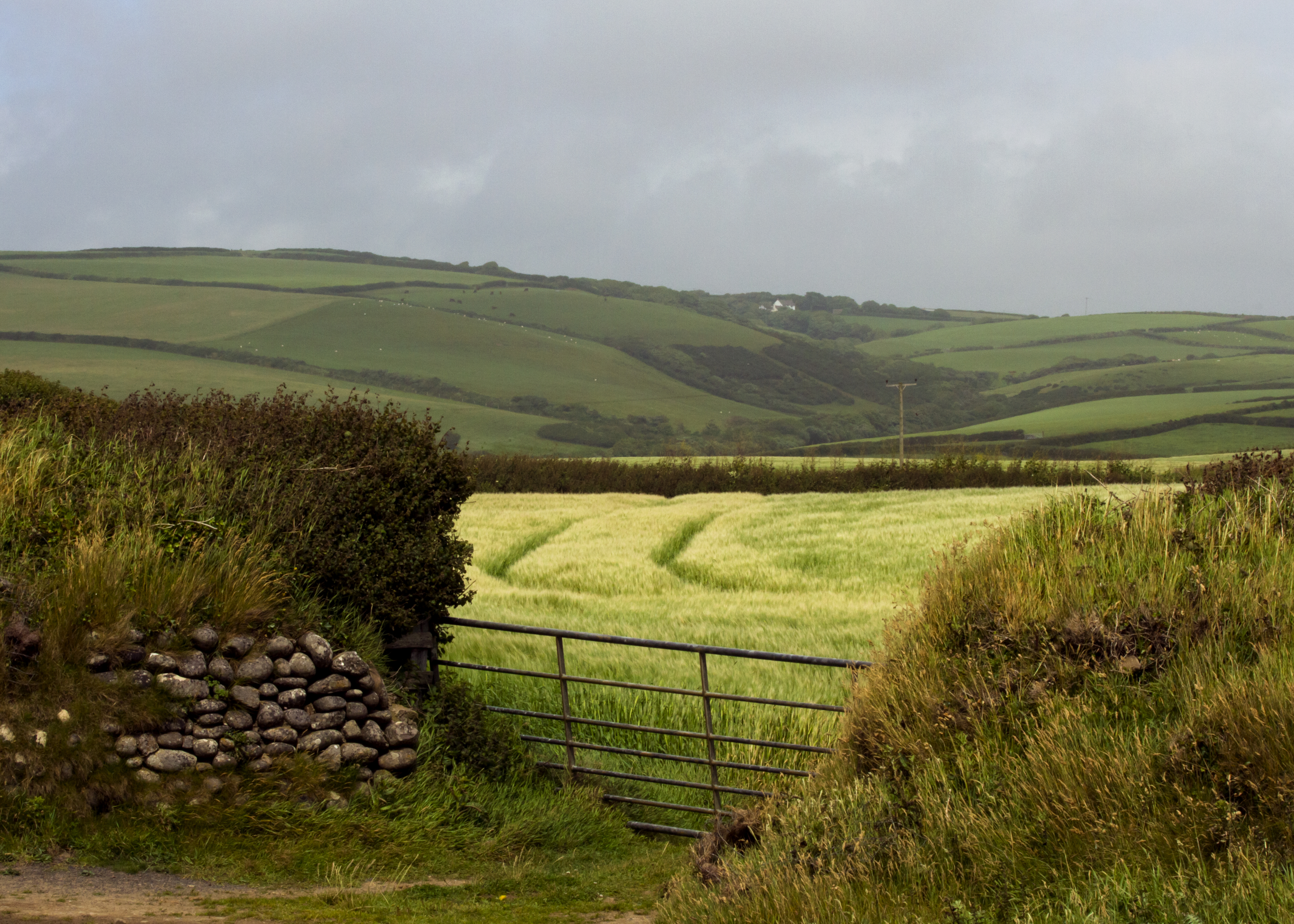 Cornish Fields