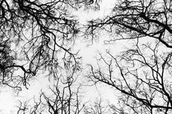 Branchscape