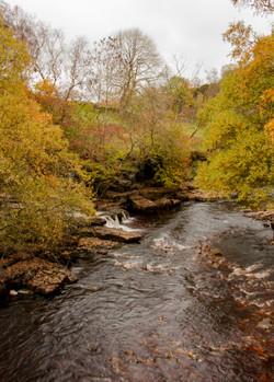 Yorkshire Stream