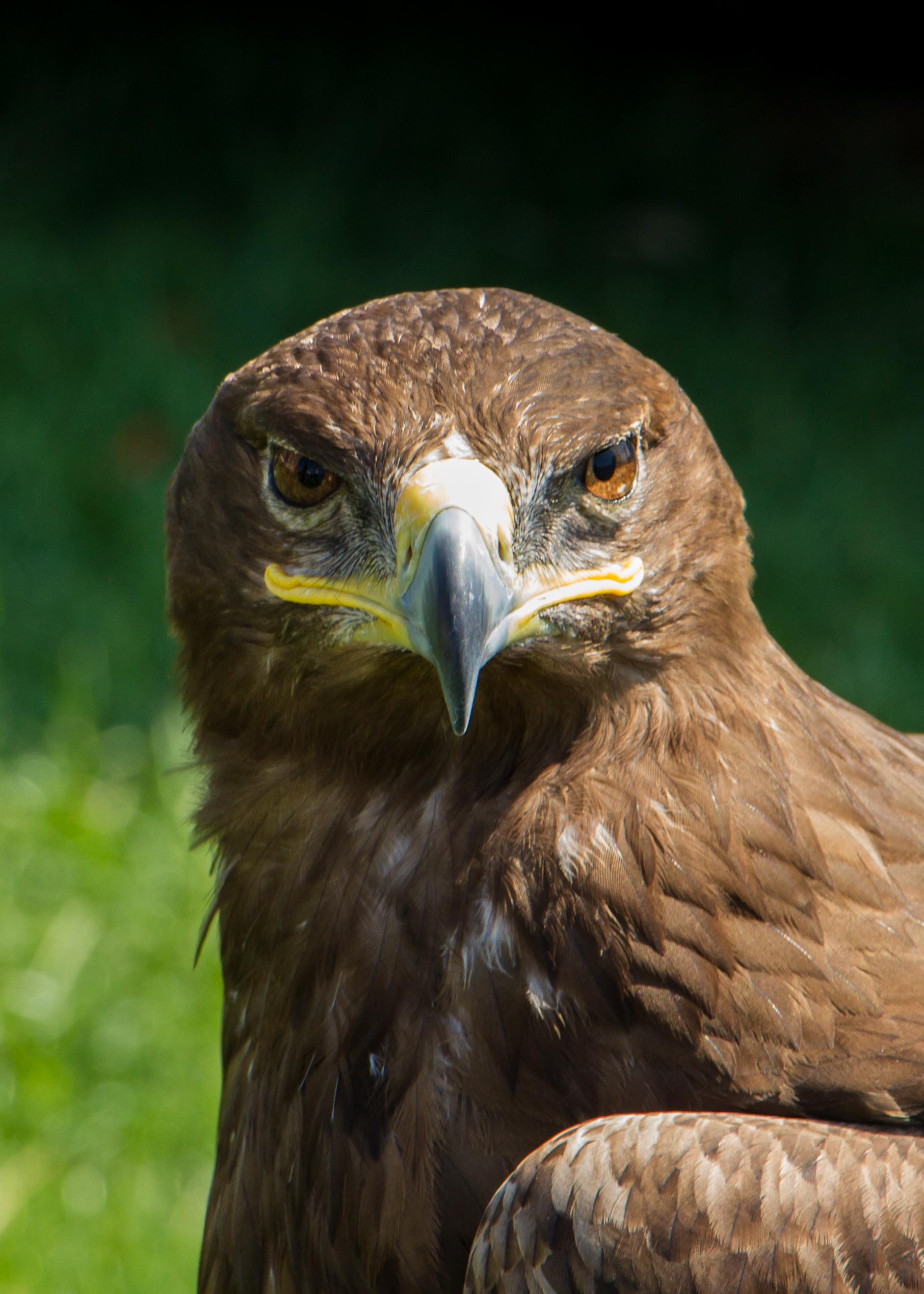 Eager Eagle