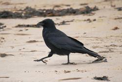Crow Steps