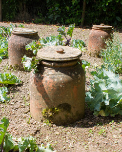 Vegetable Forcing Pots