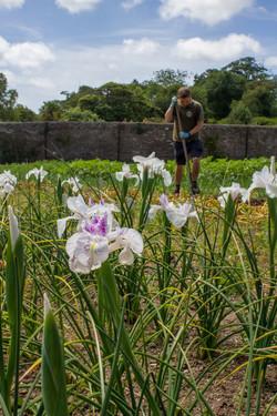 The Iris Gardener