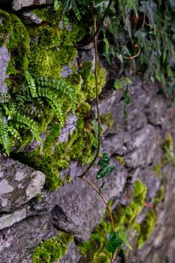 Fern Wall