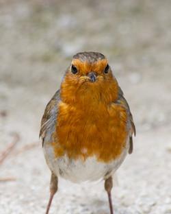 Hello Robin!