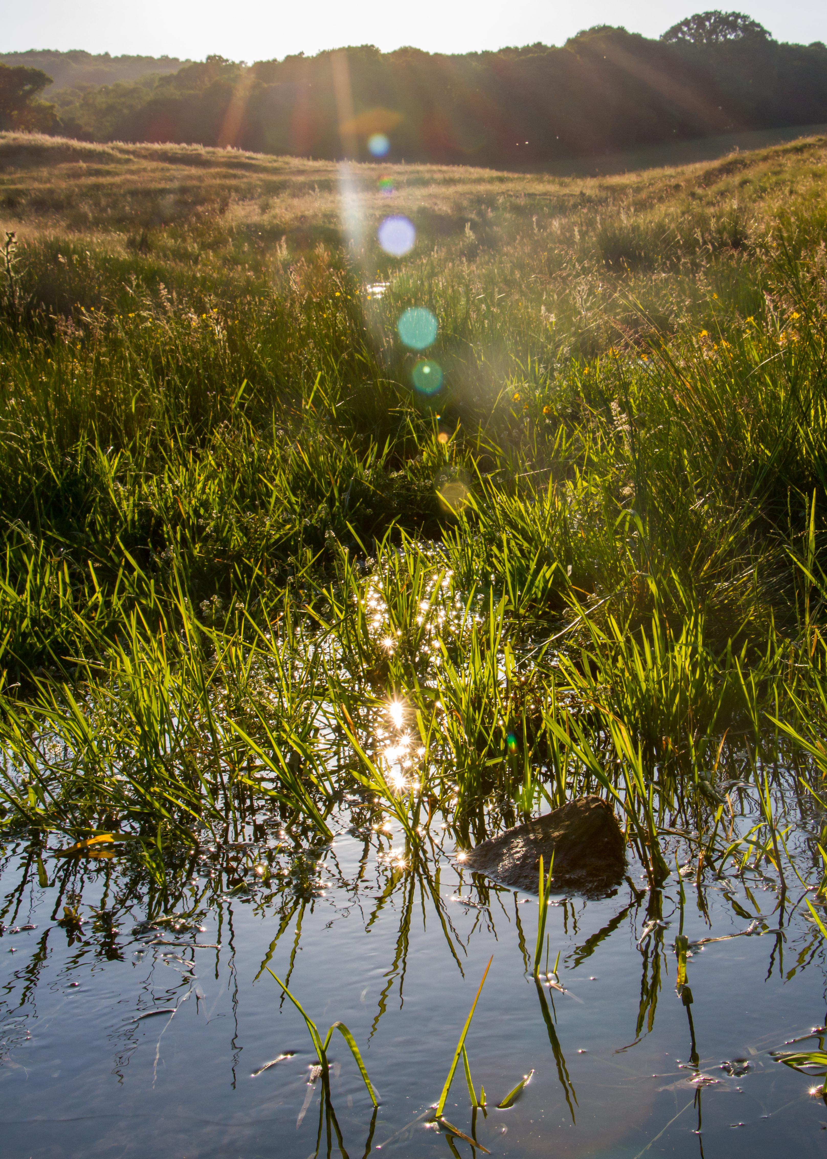 Sun and Marsh