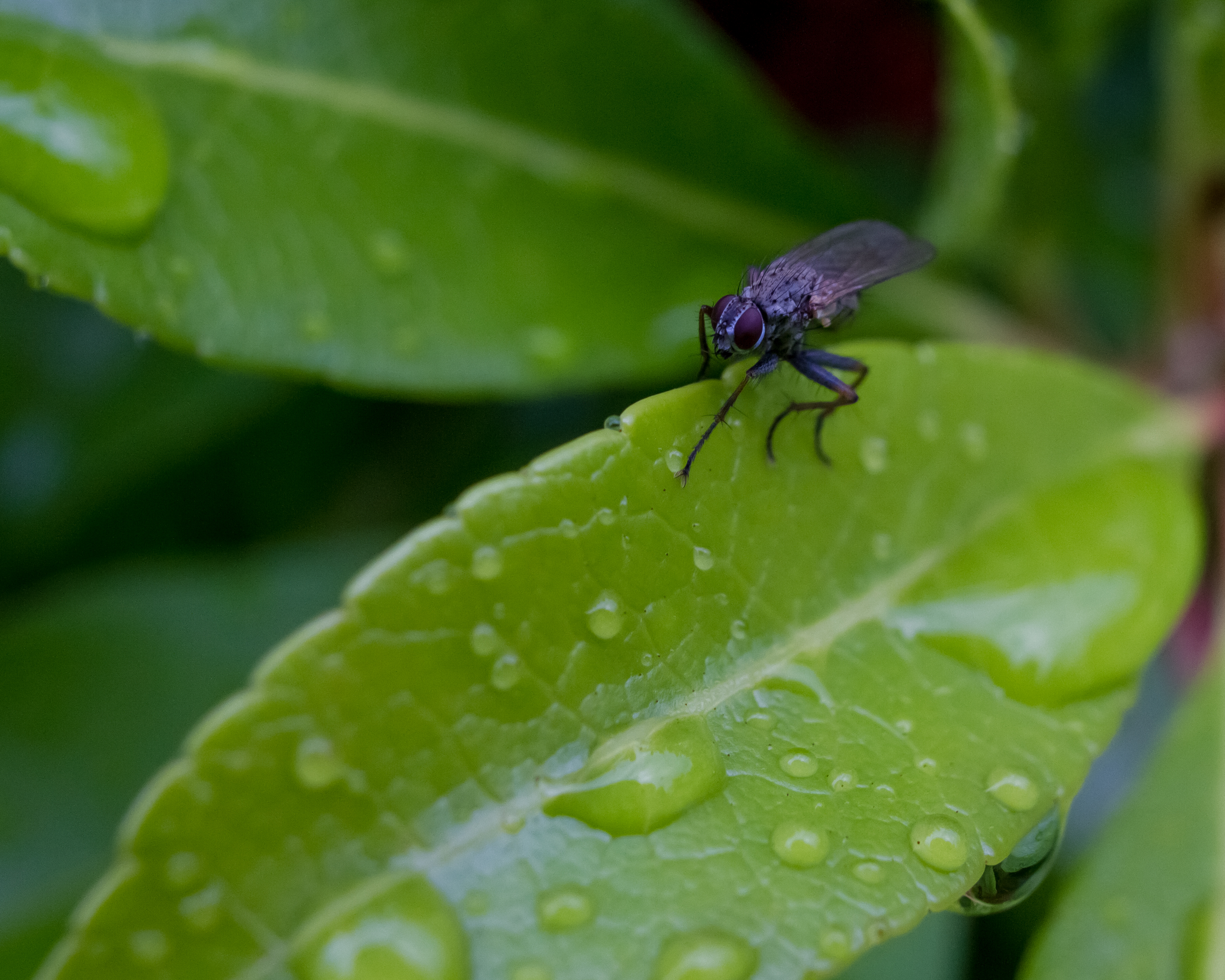 Greenfly?