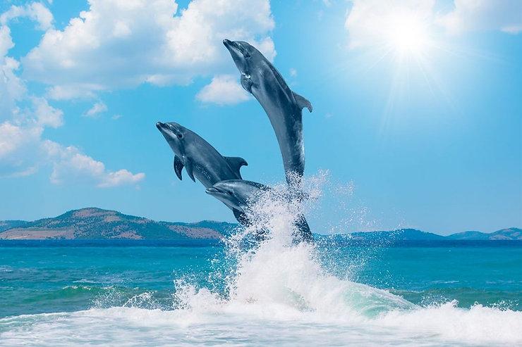 dolphins-better-sex-1024x682.jpg