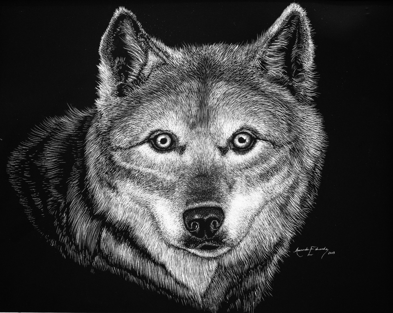 Wolf Scratchboard