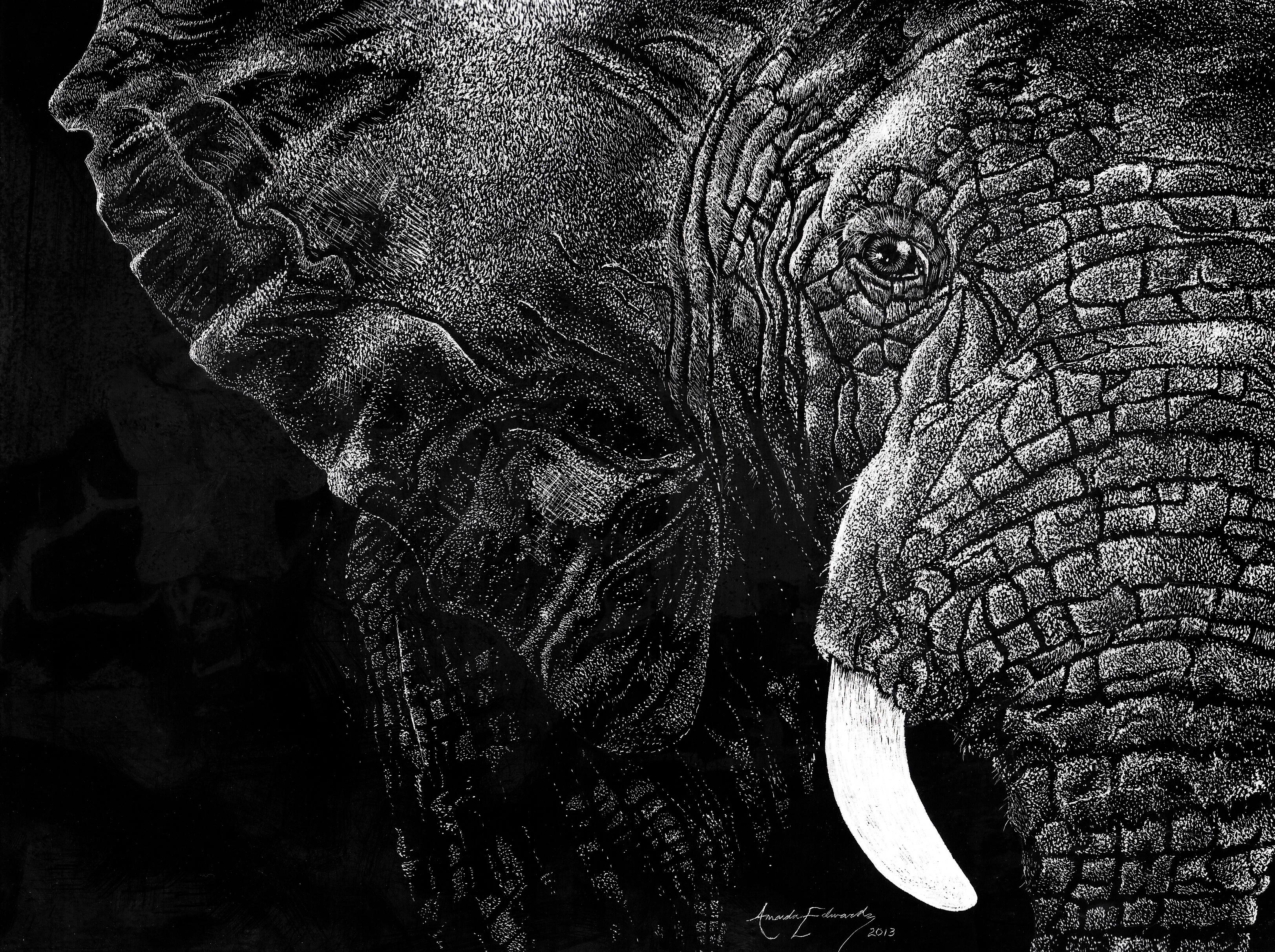 Elephant Scratchboard