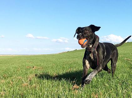 Hundeschule, der Hund und ich, Gaby Langer, Hundetrainerin