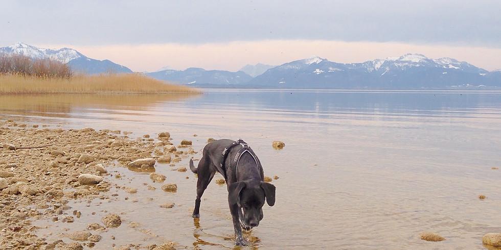 Hunde-schwimm-Tag