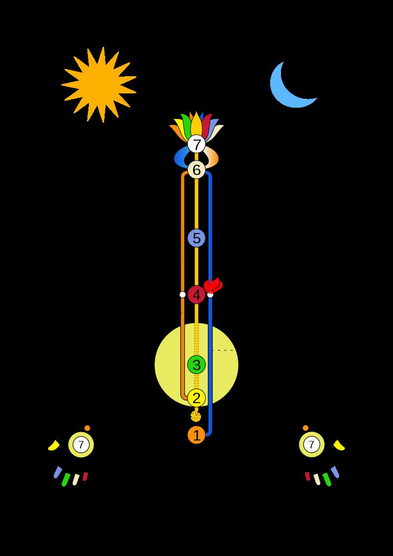 Illustration of Ida, Pingala, and Sushumna nadis in Yoga.