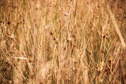 Dried Grass_Painterly.jpg