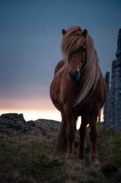 Horse_Painterly.jpg