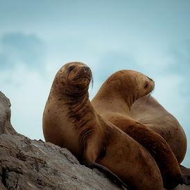 Seal_Painterly.jpg