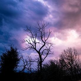 Tree_Painterly.jpg