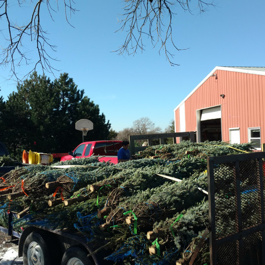 Precut Trees Delivered