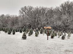 Peaceful Pines snow.jpg
