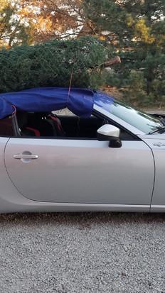 Any car can haul a tree!!