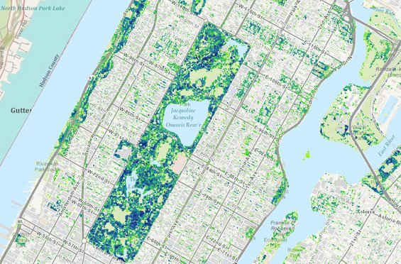 NYC Tree Height Map