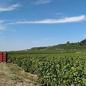 Vignes Montgueux vendanges champagne