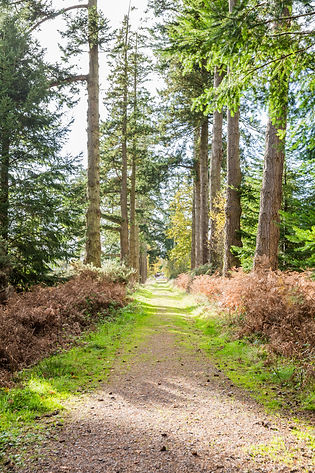 New Forest, Hampshire, countryside