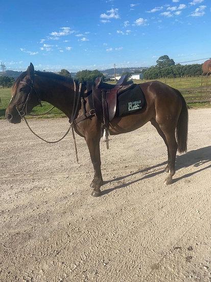 CLOUD - Stock Horse Mare