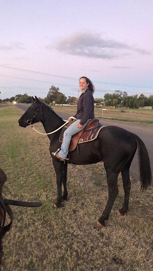 BONNIE - Stock Horse Mare