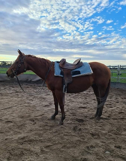 ACCIDENTAL SPIN - QH Mare