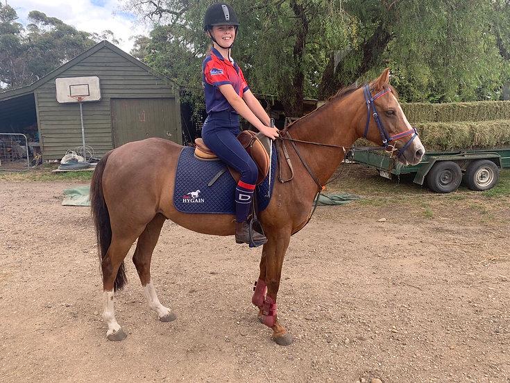 MALIBU PARK ARMANI CODE - Riding Pony Gelding