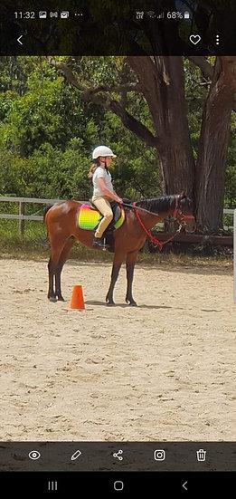 MERIVALE PARK ROYAL ASCOT - Riding Pony/Part Welsh Gelding
