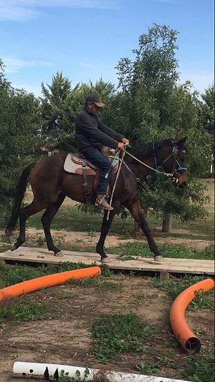 BERNIE - Stock Horse Gelding