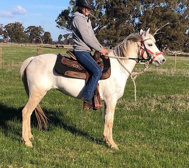 LAKE VALE GOLDIE - Australian Pony Mare