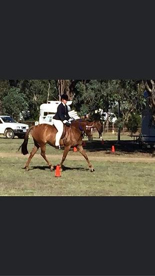 GORDON PARK ELITE - Riding Pony Mare