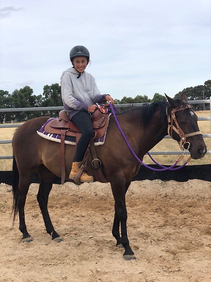 TEQUILA - Stock Horse Mare
