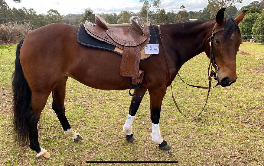 GRACIE - Stock Horse Mare