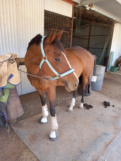SANDY (UNNAMED 2009) - Thoroughbred Mare
