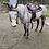 Thumbnail: BLUEY - QH x Stock Horse Gelding