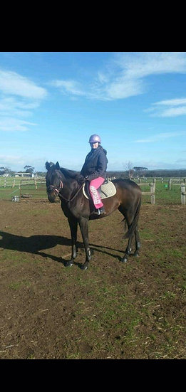 (LUNAYIR (FR) 2009) - Thoroughbred Gelding