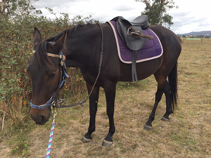 GISELLE (UNNAMED 2017)  - Standardbred Filly