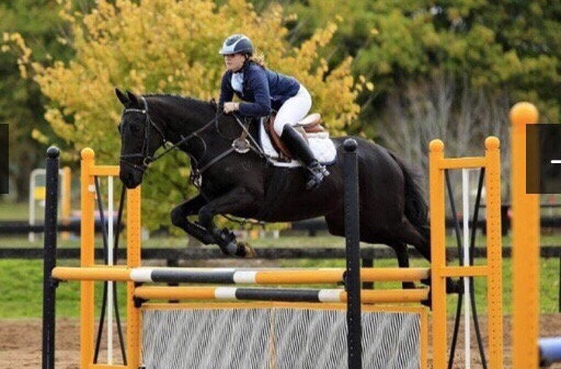 FIRST D'OR (UNNAMED 2005)  - Thoroughbred Mare