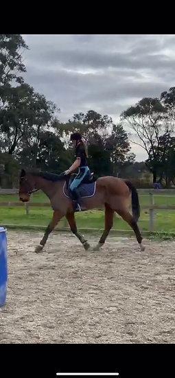 (FEARLESS FLY 2006) - Thoroughbred Gelding