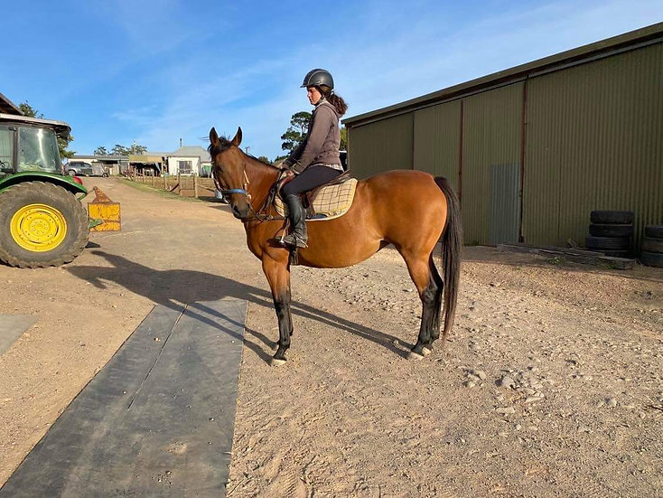 VAL (FRONT GATE 2010)  - Thoroughbred Mare