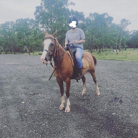 SASSY - Quarter Pony Mare