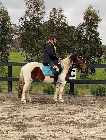 DOLLY - Pony Mare