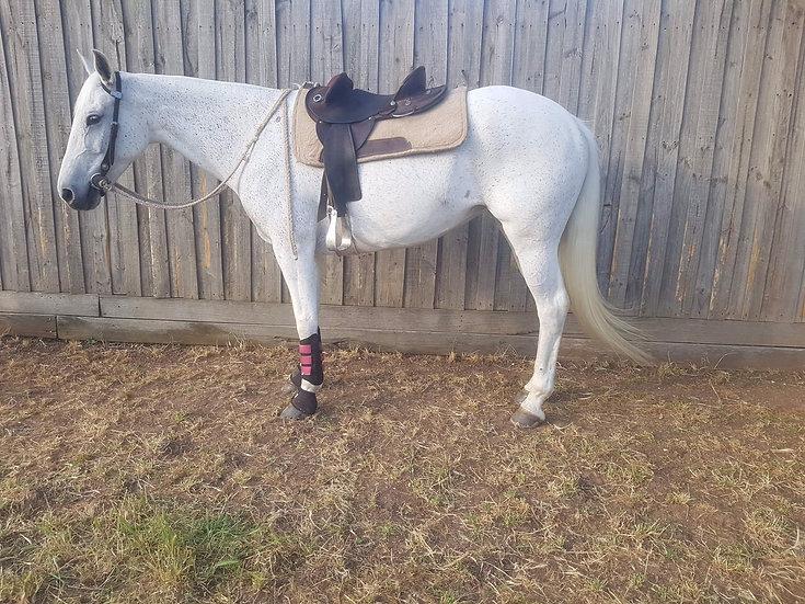 ROSA - Stock Horse Mare