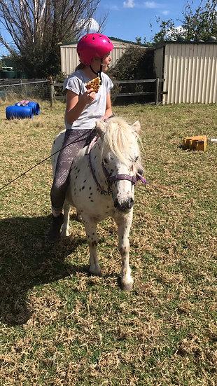 FRECKLES - Appaloosa Pony Gelding