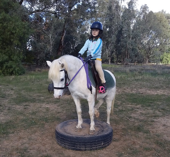 COCO - Welsh Mare